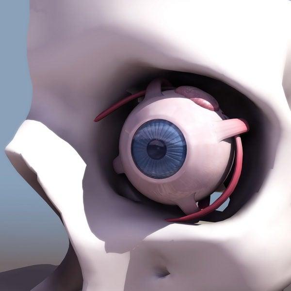 تشريح العين البشرية