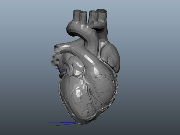 تشريح قلب الإنسان المتحركة