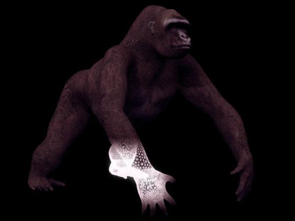 Eläinten Blackback Gorilla