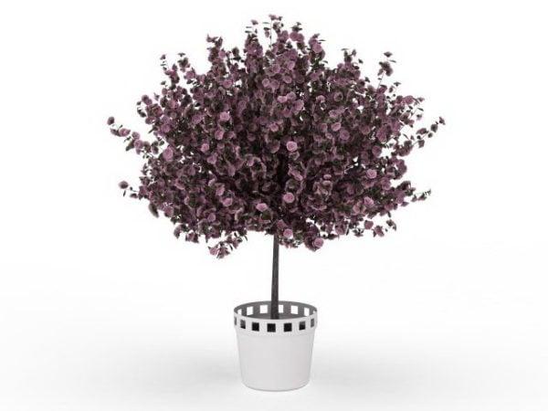 Maceta interior púrpura floreciente