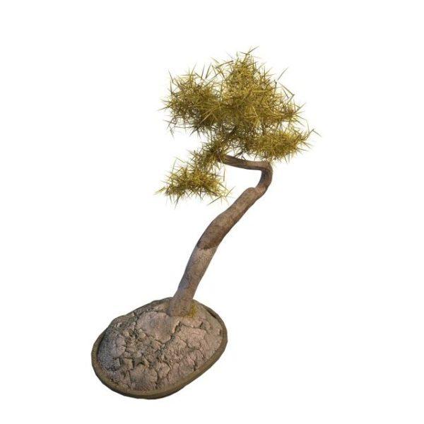 Kotipuutarha Bonsai Pine Tree