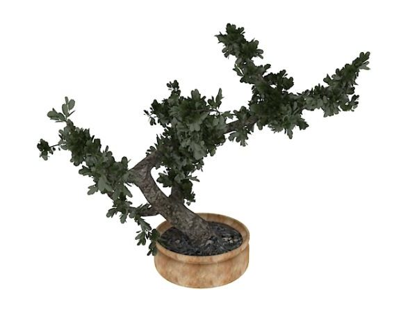 Sisätiloissa oleva Bonsai-puu