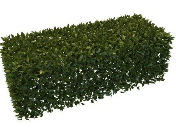 Puutarha pensaskasvien moduuli