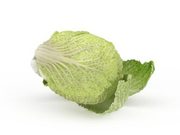 Celery Cabbage Vegetable