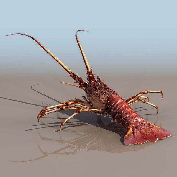 Sea Clawed Lobster
