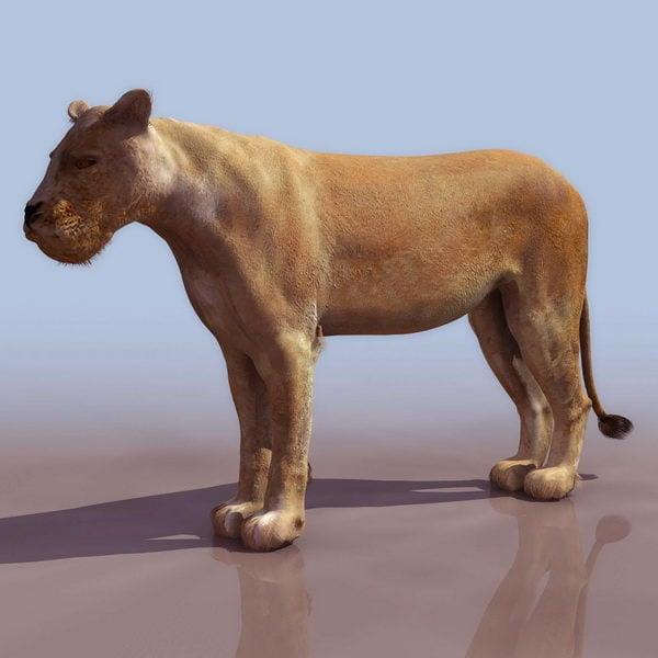 África hembra león