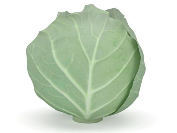 Nature Cabbage Vegetable