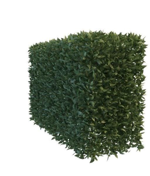 Puutarha pensaskasvit