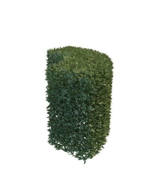 Puutarha pensasuojattu Bush