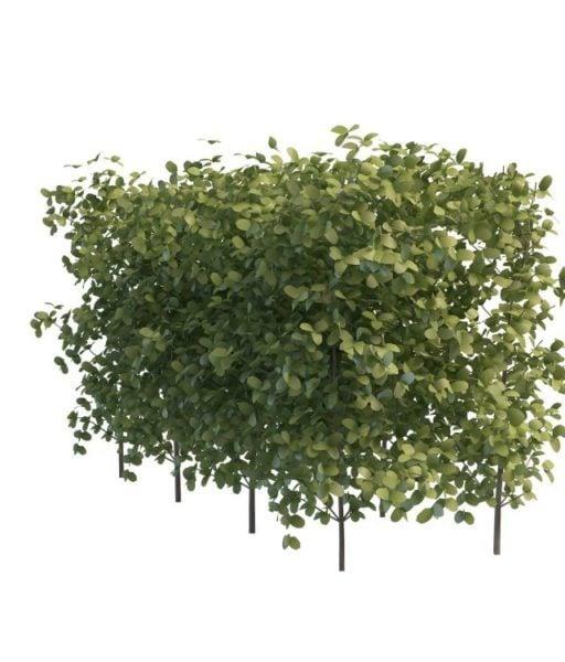 Vihreät pensasaidat puutarhaan