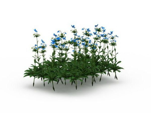 Planta de amapola azul del Himalaya al aire libre