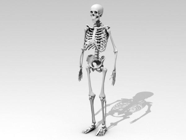 تشريح جسم الإنسان