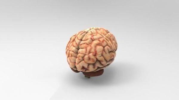الدماغ البشري واقعية