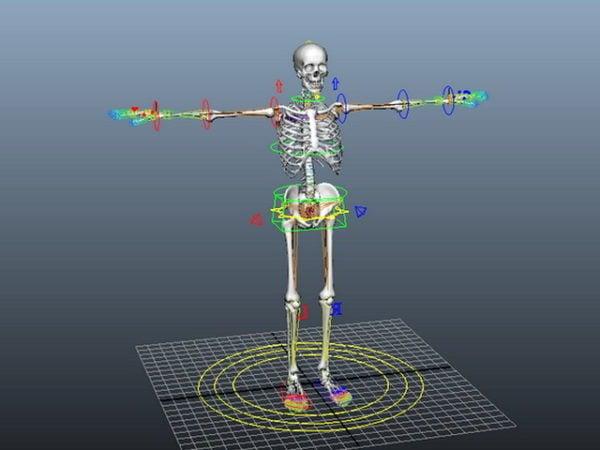 تلاعب الهيكل العظمي البشري