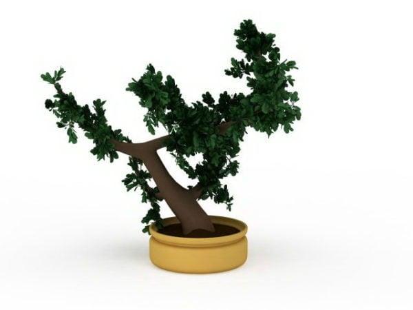 Japanilainen sisätiloissa oleva bonsai-puu
