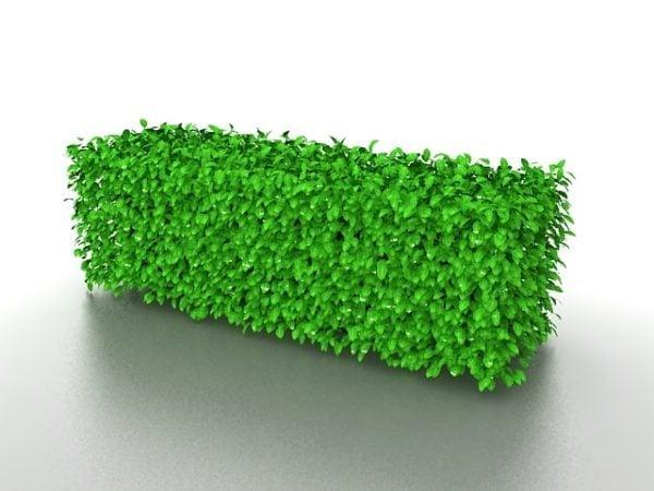 Maisemapuutarha vihreät pensasaidat
