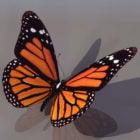 Animal Monarch Butterfly