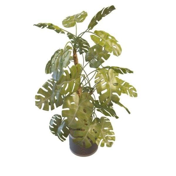 Piante Da Interno 3d.Monstera Deliciosa Indoor Plant Modello 3d Gratuito Max Vray