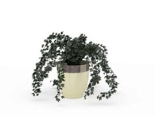 Plantas de hiedra en macetas para jardín interior