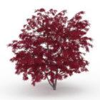 Purple Maple Tree Plant