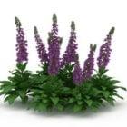 Salvia Divinorum Flower Outdoor Plants