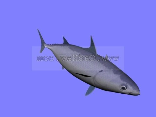 Splitfin Flashlightfish Animal