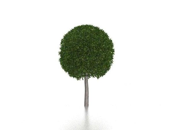 Garden Topiary Tree Free 3d Model Max Vray Open3dmodel 199029