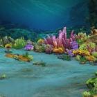風景水中の海のシーン