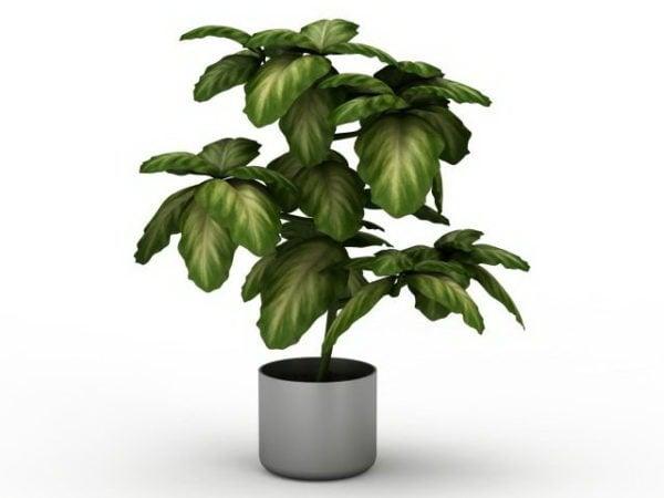 Monivärinen sisätilojen kasvi