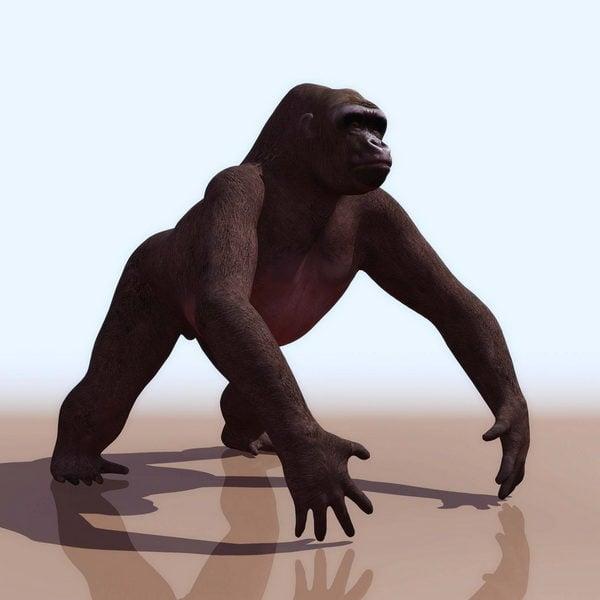 Batı goril