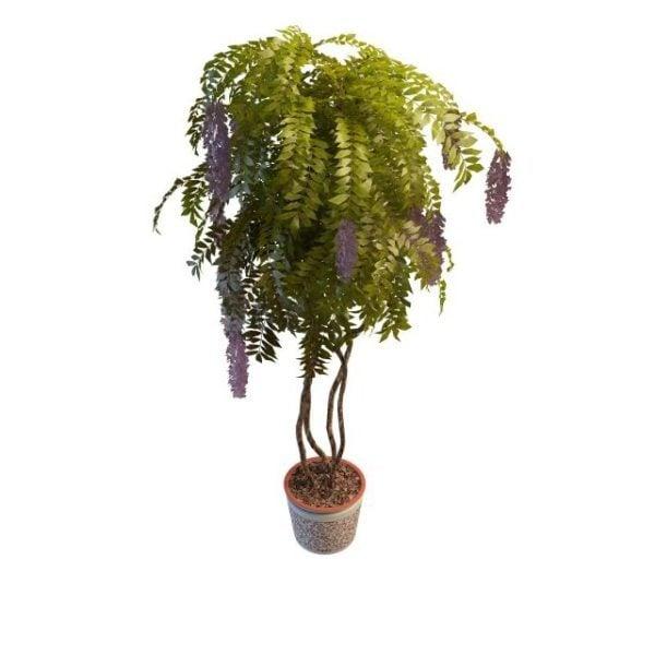 Piante Da Interno 3d.Indoor Wisteria Potted Plants Modello 3d Gratuito Max Vray