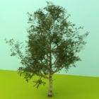 أوراق شجرة الحديقة