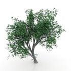 Maple Tree Lowpoly