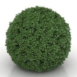 Ball Hedge Bush