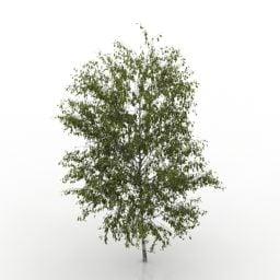 Árvore de vidoeiro de jardim
