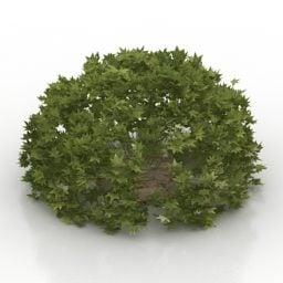 Garden Bush Maple Shurb免费3d模型 3ds Gsm Obj Open3dmodel 天内