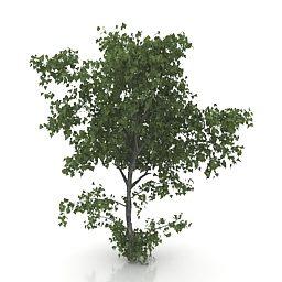 Árvore de tília de jardim