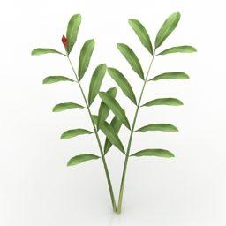 Planta de jardim Alpinia