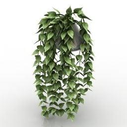 Jarrón Ivy Plant