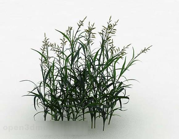 Green Grass V3