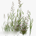 Pianta da giardino verde erba