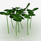Cây xa trục thảo ở ái nhi lan