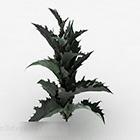 Garden Barbed Leaf Plant
