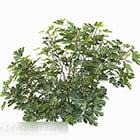 Grön fiolformad bladbuske