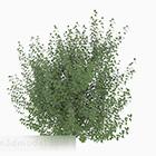 Rośliny zielone liście niskie krzewy