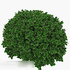 Green Round Edge Leaf Plant Hedge