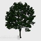 Lush Tree