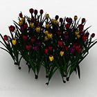 متعدد الألوان زهرة نبات الزينة