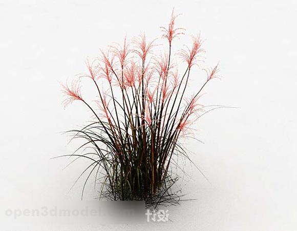 Outdoor Wildflower Plant