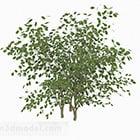 Ovale Blätter Bush